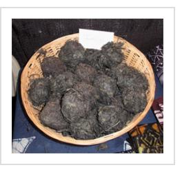 Balls of raw indigo plant, used for dyeing. (Photograph © Anthony Hart Fisher 2011).