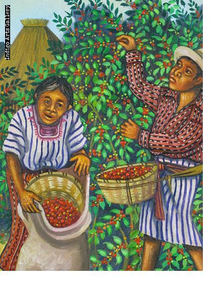 Coffee Harvest (III)
