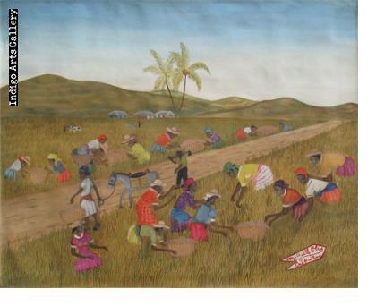 Rice Harvest Michaelle Obin